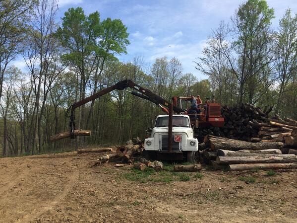 Timber Harvesting And Tree Care