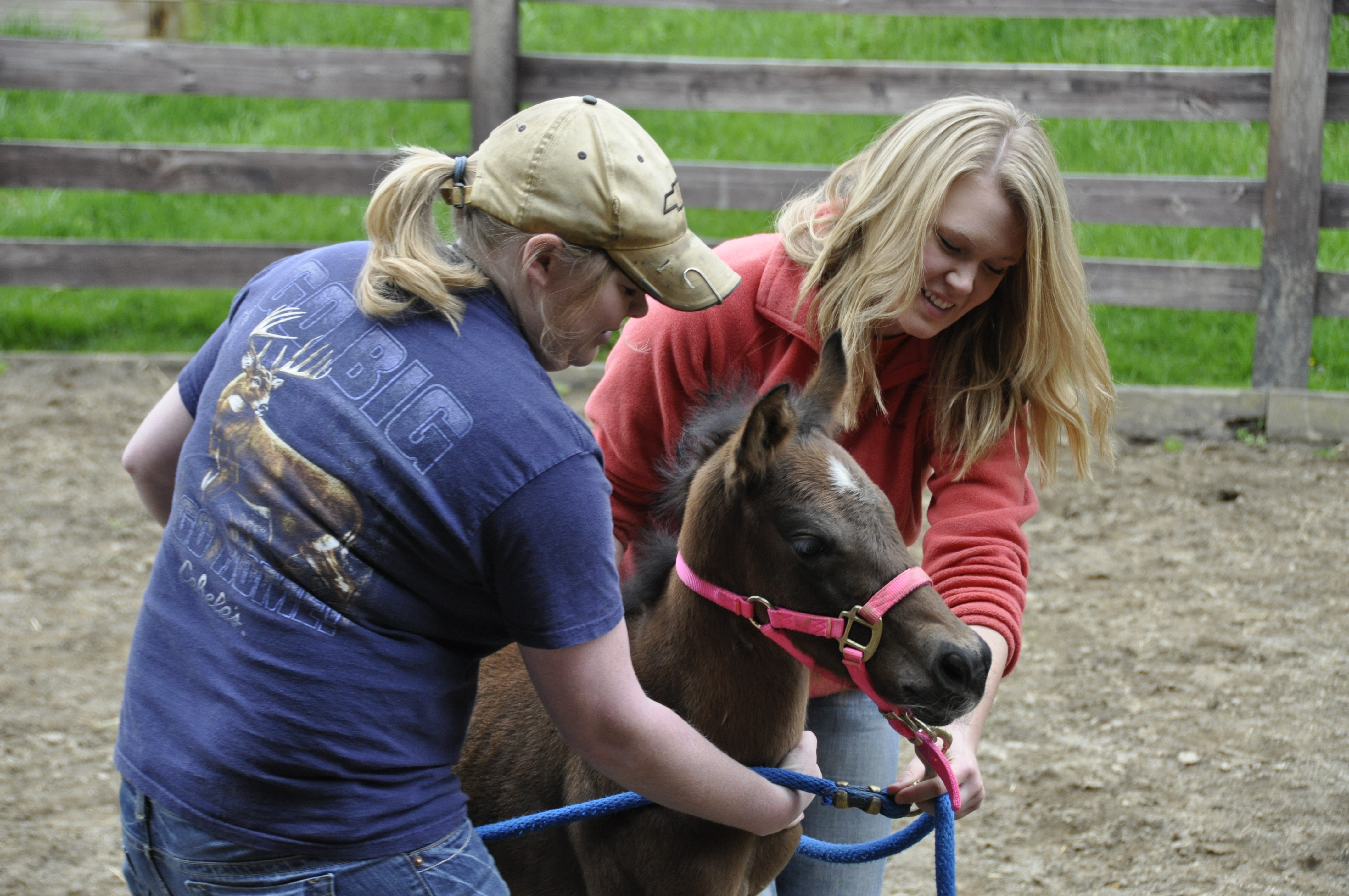 Equine Health and Complementary Therapies
