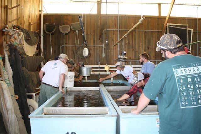 Fish Management & Aquaculture Sciences