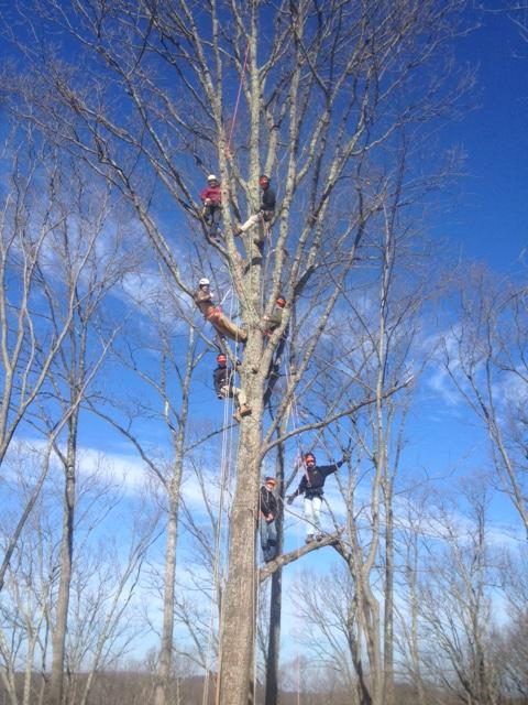 Timber Harvesting & Tree Care Certificate